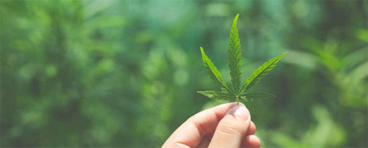 Cannabis - Miért alakul ki függőség?