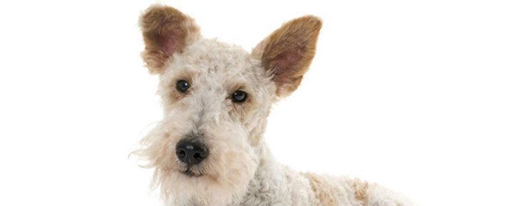 Jó-e a csont kutyánknak?
